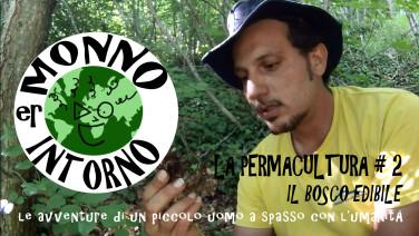Er Monno intorno - LA PERMACULTURA 2 - Il bosco edibile Vimeo